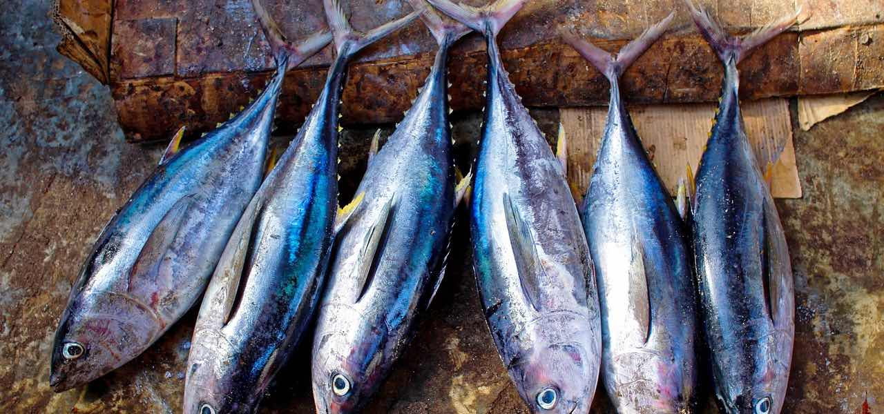 Blauer Fisch sehr gesund bei TarifaFisch