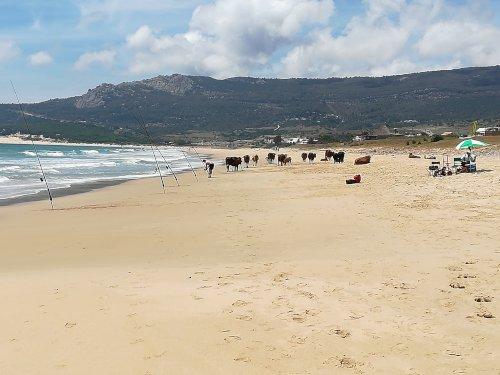 Bolonia Strand und Düne